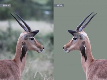 Animal Photo Retouching Services – Global Photo Edit